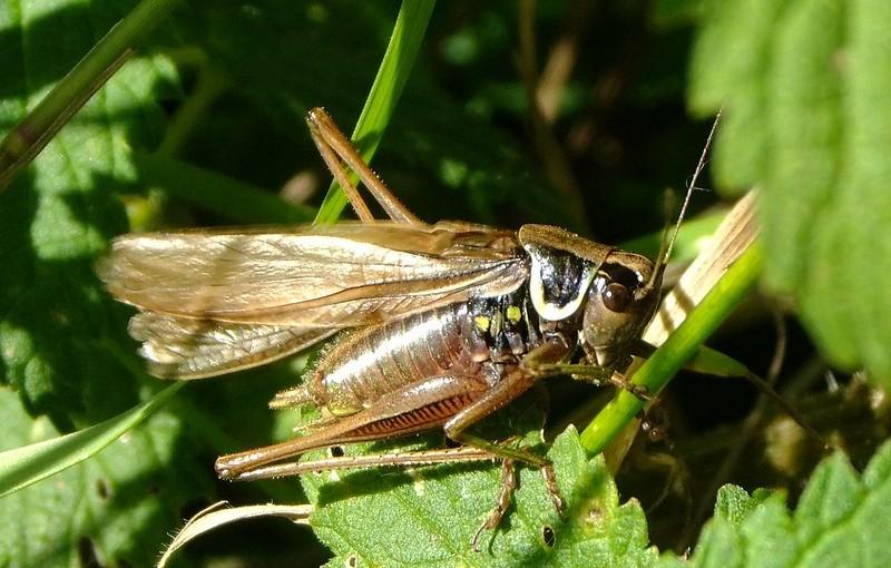 V.G. Dethier, entomologist