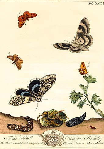 Life with Lepidoptera